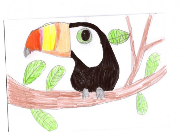 george-toucan