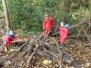 Forest Schools 2019