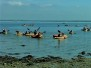 Year 6 Isle of Wight